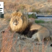 Wildlife conservation experience with the Big 5