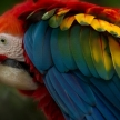 Wildlife sanctuary volunteering in Ecuador