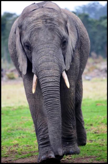Mashudu- the elephant Oyster sponsers