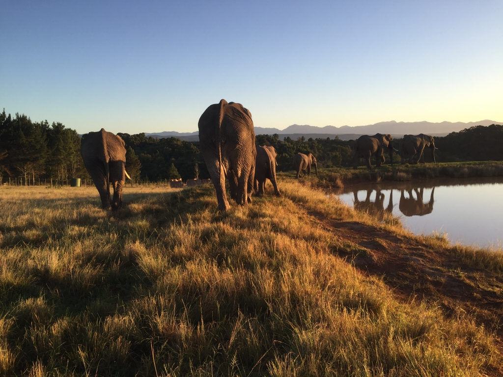 My South African project with elephants