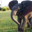 Volunteer with elephants in South Africa