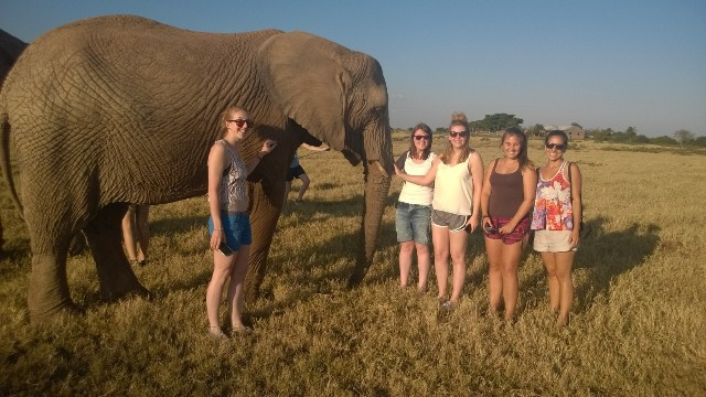 volunteer group with an elephant in South Africa