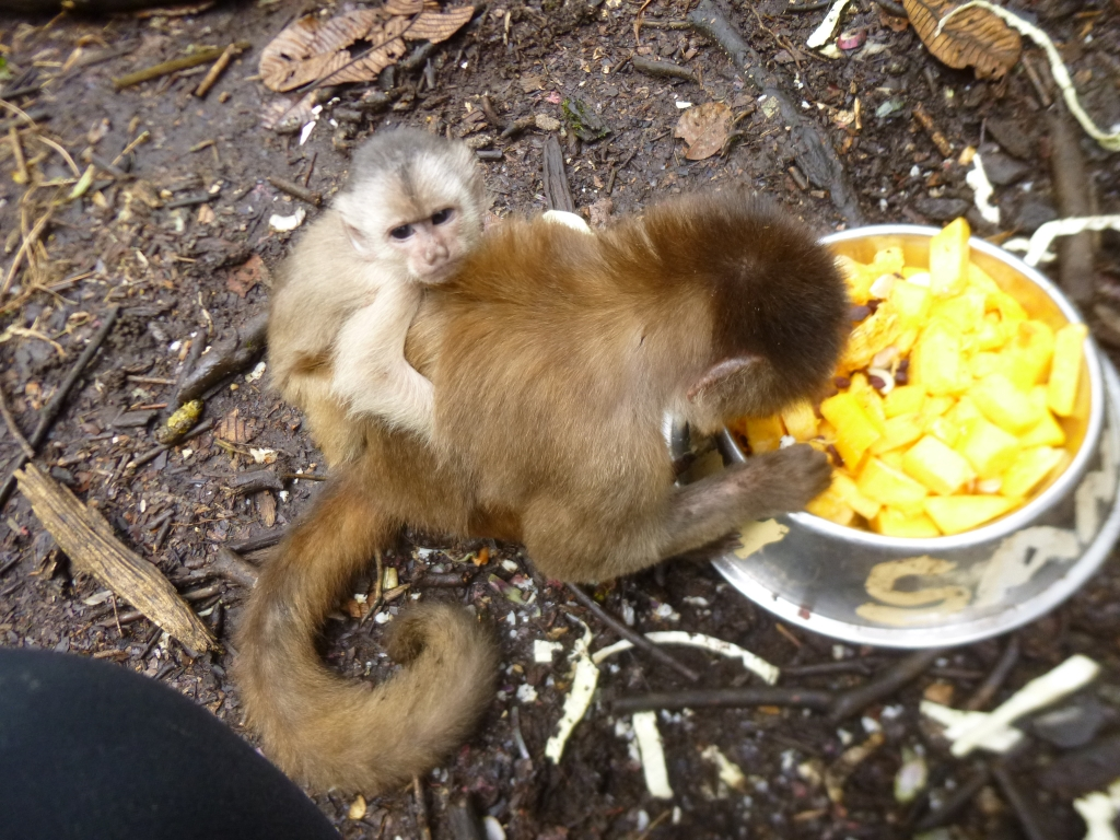 Meet the monkeys in Ecuador