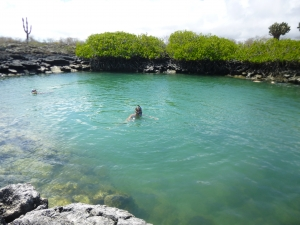 Snorkelling with sharks in the Galapagos
