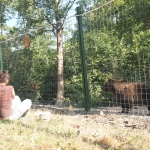 Volunteer in Romania