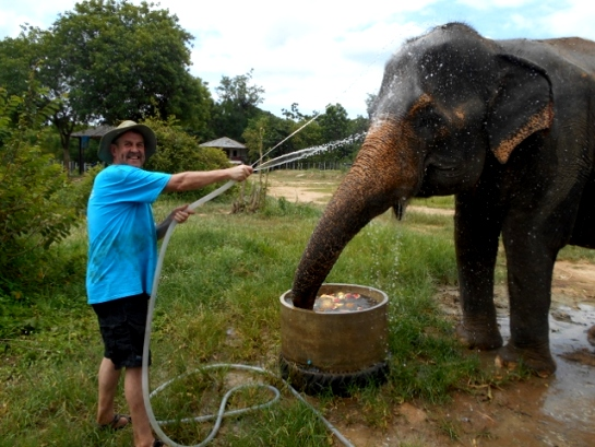 A volunteer helps to bathe an elephant