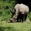 Rhino conservation volunteering and safari in Uganda