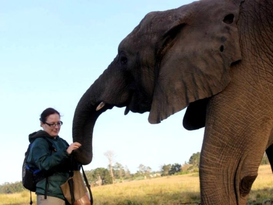 成熟した象のチューブ