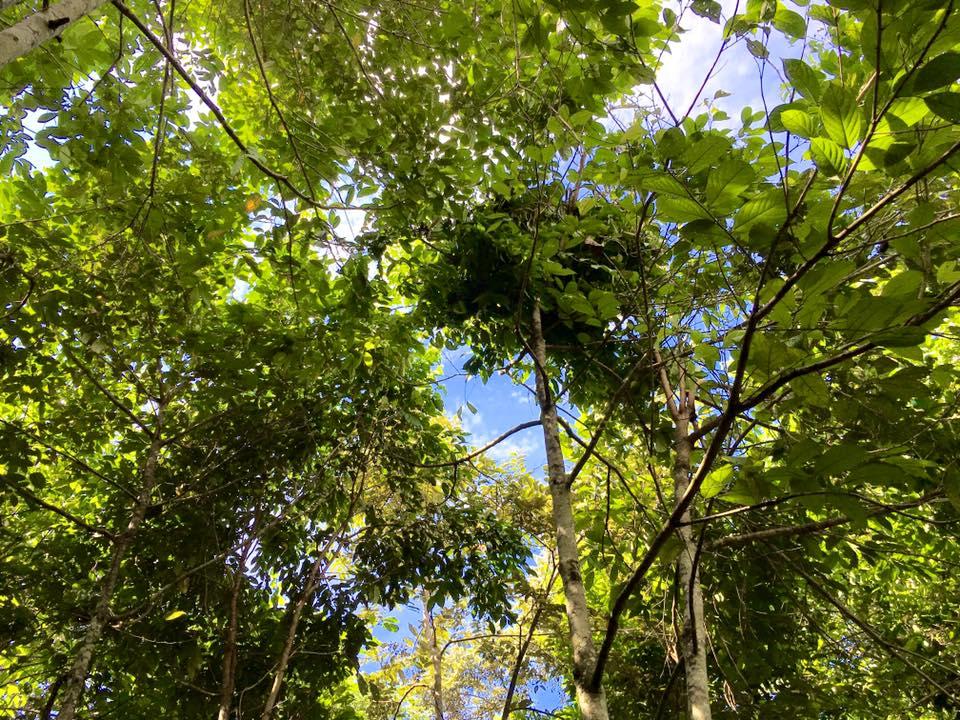 Rain forest regeneration