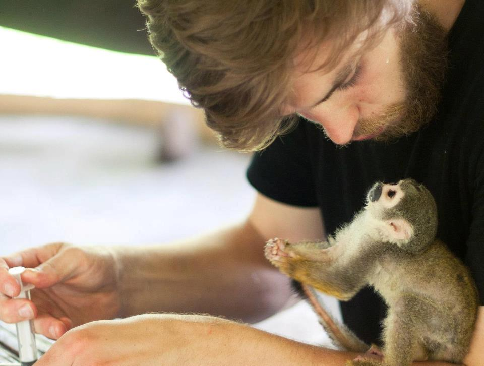 Volunteer feeding baby monkey