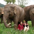 Thailand - Elephants