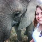 Elephant conservation volunteering