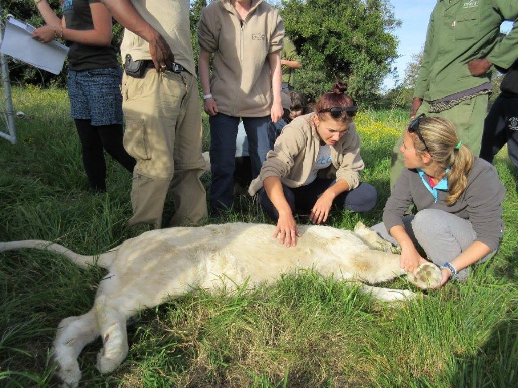 Veterinary experience