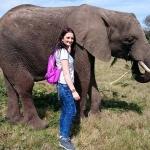 Volunteering with elephants