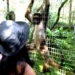Volunteer with monkeys in Ecuador