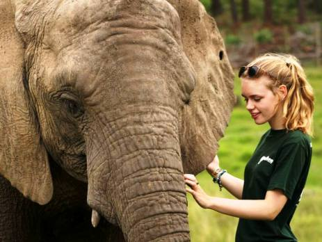 Female volunteer standing next to an elephant whilst taking part in an elephant conservation project in South Africa on her gap year