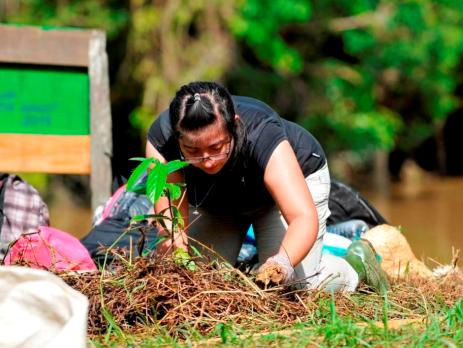 A volunteer planting a tree on a conservation project in Malaysia