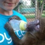 volunteering with monkeys