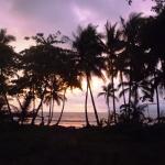 costa rica trees silhouette