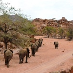 namibia elephants in line