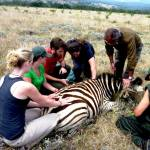 vet experience south africa
