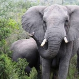 volunteer with elephants in SA