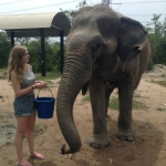 Female volunteer feeding an elephant in Thailand
