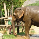 Volunteering with elephants in Thailand