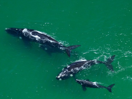 Try to spot whales as they migrate for food and breeding grounds