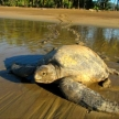 Save the turtles in Costa Rica