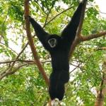 Thailand Wildlife