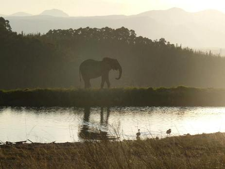 Elephant silhouette in South Africa