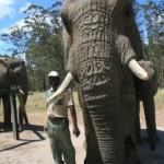 elephant new 2
