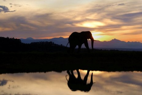 South Africa elephant reflection