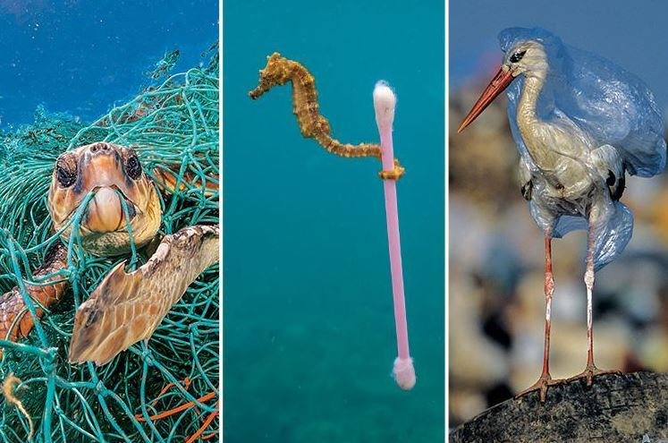 Turtle trapped in net, seahorse with ear bud, bird in bag