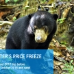 Volunteer with bears in Borneo