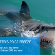 Volunteer with sharks in South Africa