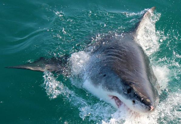 Shark Conservation Update