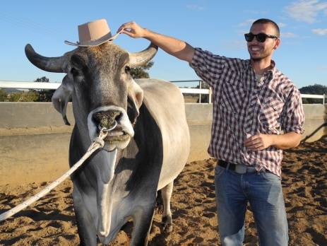 A participant on the Australian paid farm work programme holding a cowboy hat on the head of a bull