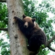 Save £100 on the volunteering with bears in Romania programme